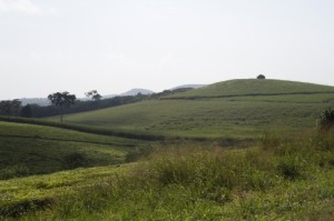On the road to Jinga, there are vast rolling hills covered with tea.
